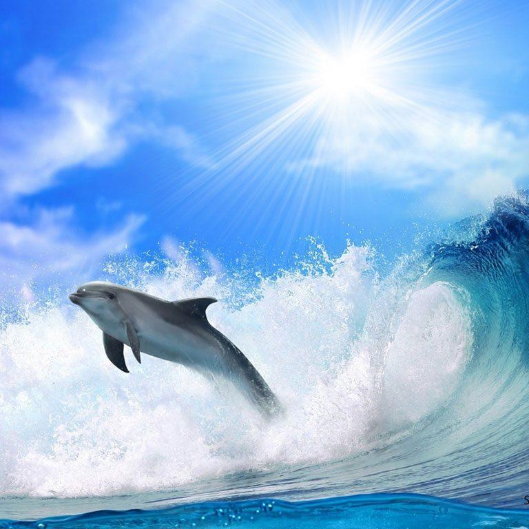 dolphins-6v